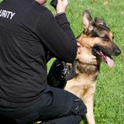Agence de sécurite | Maitre chien